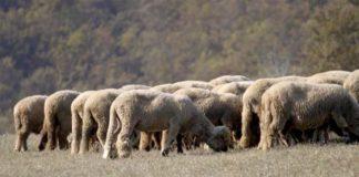 Agrosaveti---otezana-prodaja-stoke---01