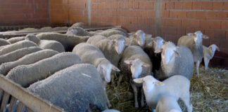 Agrosaveti---prodaja stoke---01