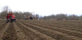 Agrosaveti---sadnja-krompira---02