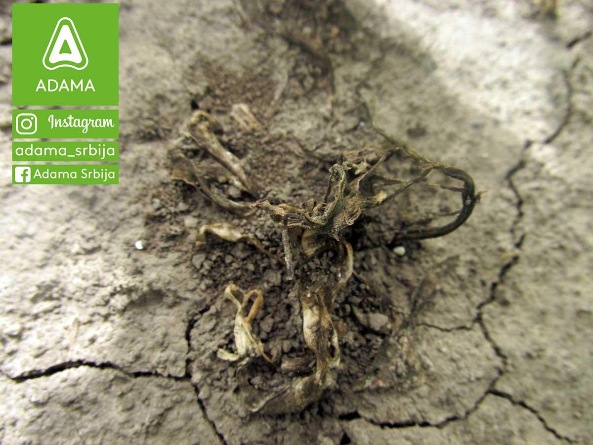 Agrosaveti---Adama---kukuruz---korovi---Sulcotrek---Nicogan---palamida---ambrozija---sirak-01
