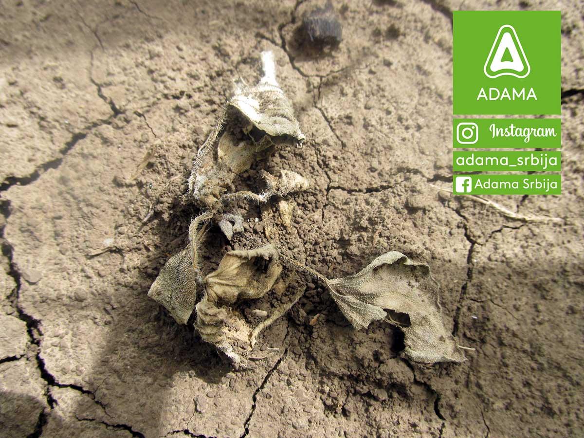 Agrosaveti---Adama---kukuruz---korovi---Sulcotrek---Nicogan---palamida---ambrozija---sirak-02