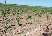 Agrosaveti---BioP-crvenilo
