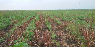 Agrosaveti---galenika-fitofarmacija---delovanje---globus---01