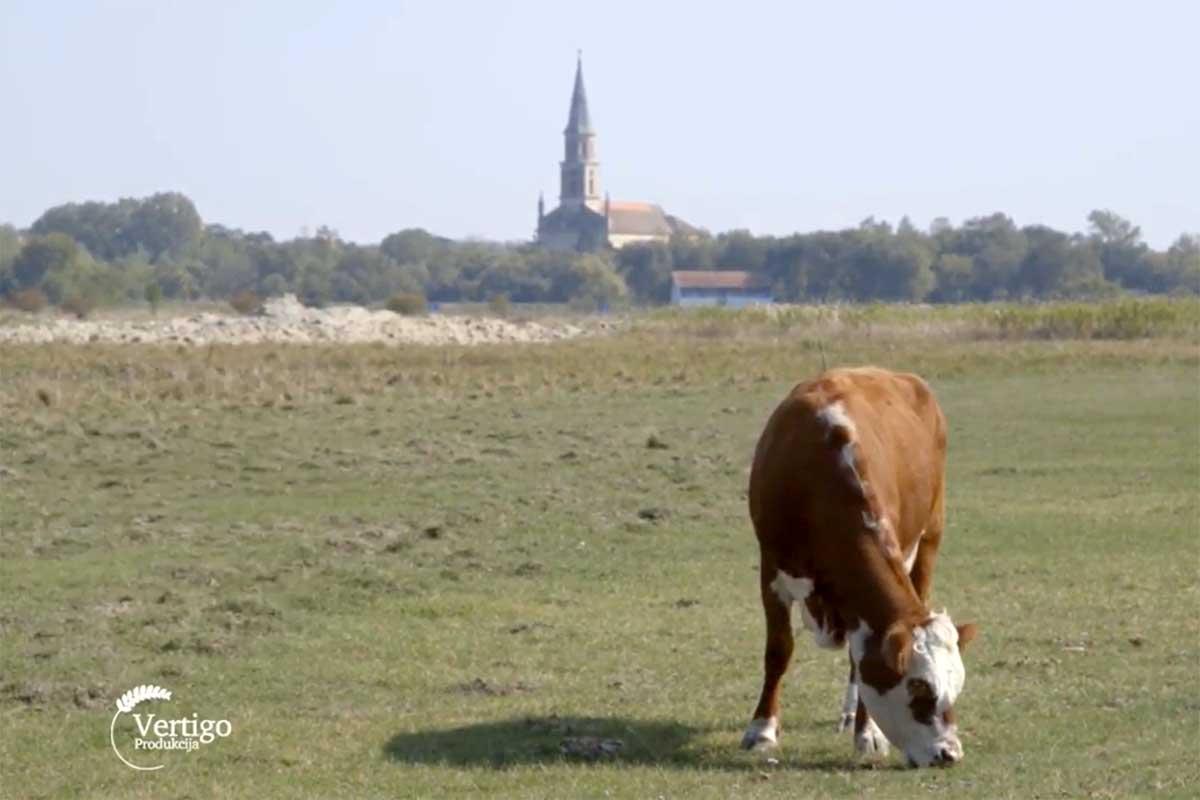 Agrosaveti---hereford---04