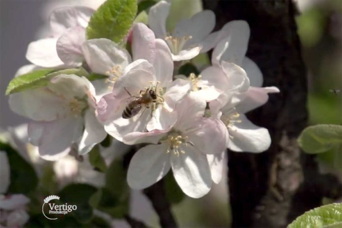 Agrosaveti---pcele---oprasivanje---04