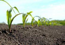 Agrosaveti---timac-agro---kukuruz---fertiactyl-starter---folijarna-prihrana