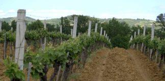 Agrosaveti---visnja---sljiva---malina---grozde---Drenca---02