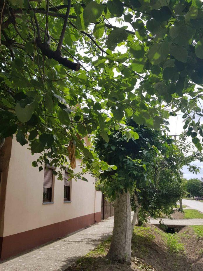 Agrosaveti---Indjija---kuce---06