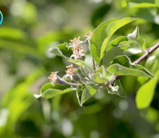 Agrosaveti---Movento---Bayer---01