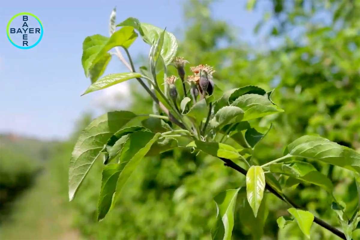 Agrosaveti---Movento---Bayer---02
