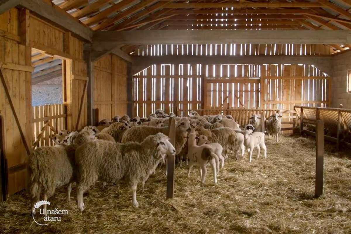 Agrosaveti---sjenicka-ovca---Ljig---ovcja-kobasica---01