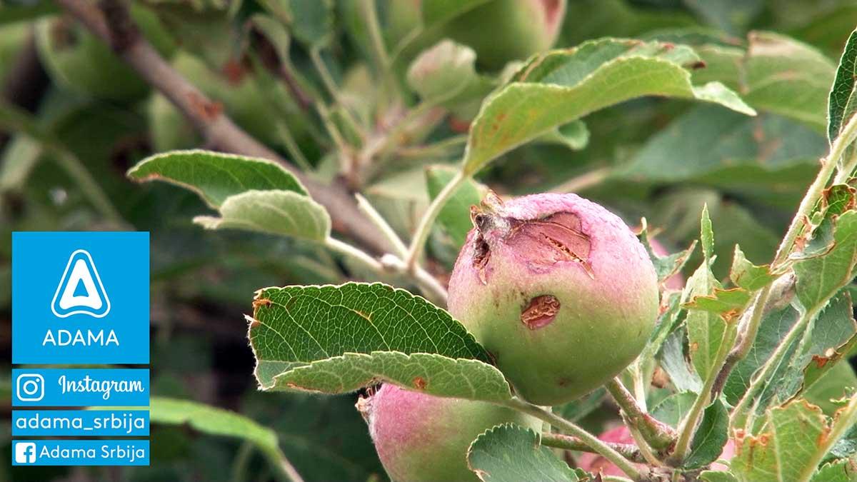 Agrosaveti---Adama---jabuka---kruska---ostecenja-od-grada---led---merpan---neoram-01