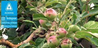 Agrosaveti---Adama---jabuka---kruska---ostecenja-od-grada---led---merpan---neoram-03