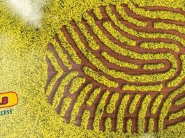 Agrosaveti---Bayer---Dekalb---uljana-repica---01