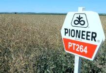 Agrosaveti---Corteva---Pioneer---Uljana-repica---01