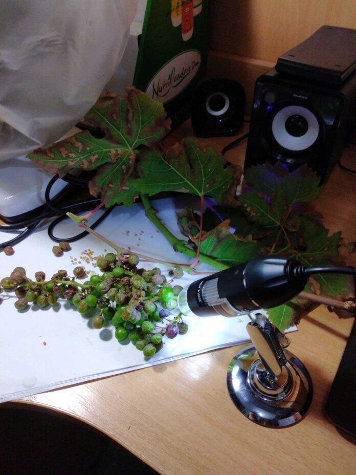 Agrosaveti---grinje---02