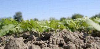 Agrosaveti---proizvodnja-pasulja---03