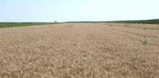 Agrosaveti---ratarska-proizvodnja---Maradik---01