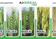 Agrosaveti---Axereal-bilbord-PSENICA-2020-500x245-6