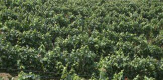Agrosaveti---Manufaktura-Spasic---01