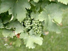 Agrosaveti---Vinarija-Reljic---06