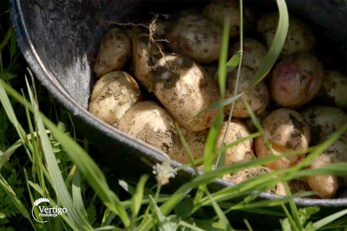 Agrosaveti---banka-semena---02