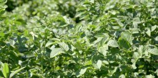 Agrosaveti---banka-semena---03