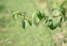 Agrosaveti---sta-sa-orezanim-granjem---01