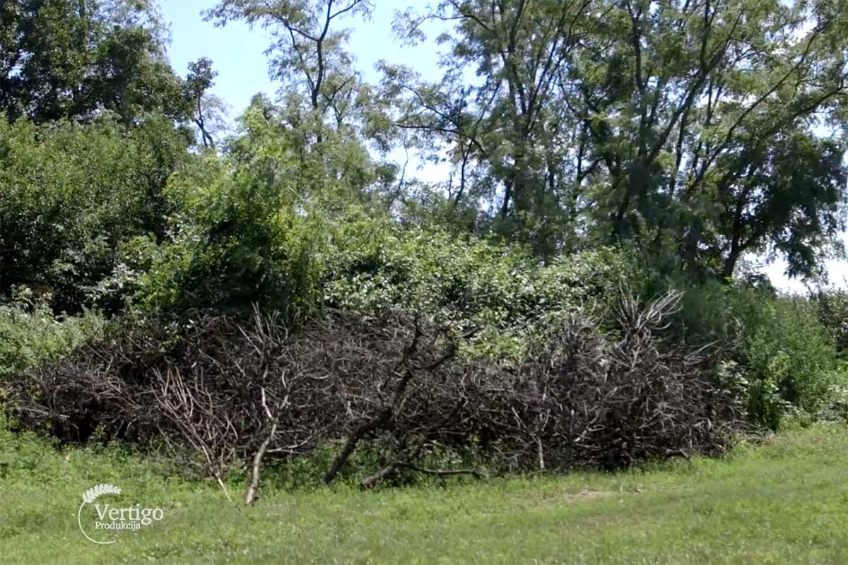 Agrosaveti---sta-sa-orezanim-granjem---02