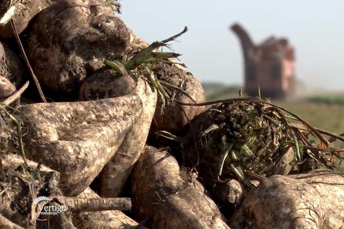 Agrosaveti---Turija---repa---soja---kukuruz---03