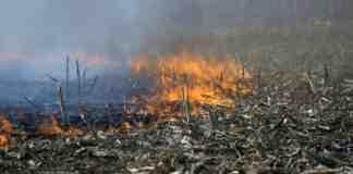 Agrosaveti---paljenje-strnjike-03