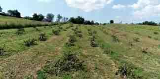 Agrosaveti---posecen-vocnjak---08