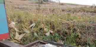 Agrosaveti---kosnice---steta---01