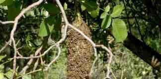 Agrosaveti---pcele---med---Mladenovac---02
