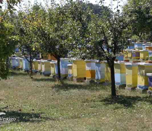 Agrosaveti---pcele---med---Mladenovac---04