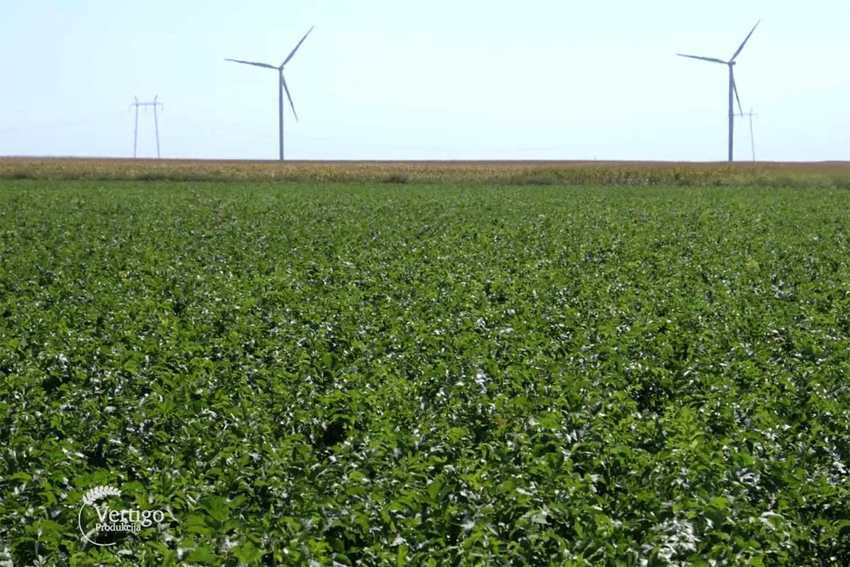 Agrosaveti---povrtarstvo---mladi---01