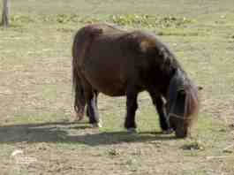 Agrsaveti---farma-ponija---02