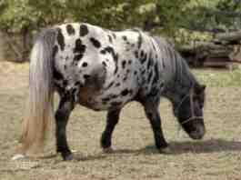 Agrsaveti---farma-ponija---04
