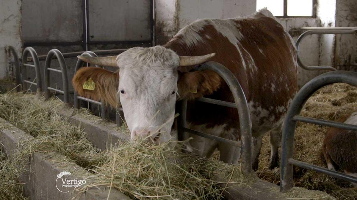 Agrosaveti---Poljoprivredna-skola-Backa-Topola-Ekonomija-09