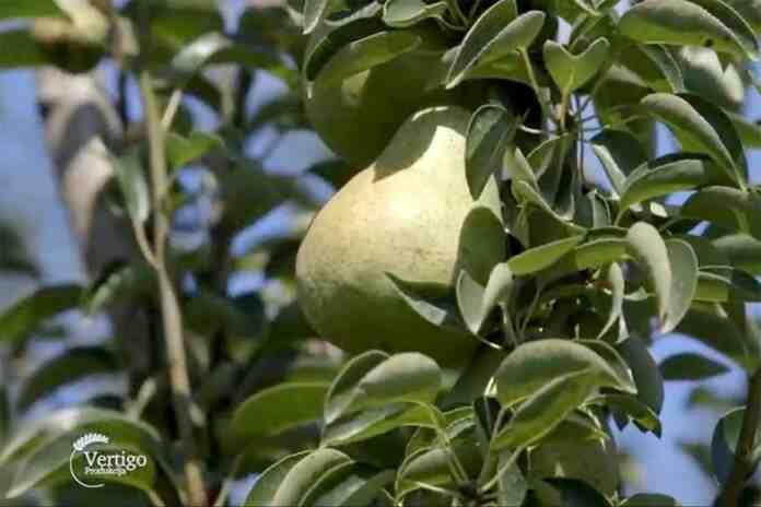 Agrosaveti---organska-materija---vocnjak---02