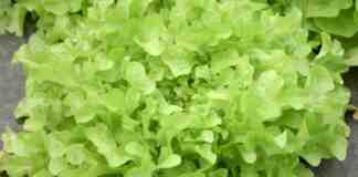 Agrosaveti---organsko-povrce---Letic---Cenej---01