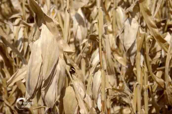 Agrosaveti---ratarska-godina---Loznica---01