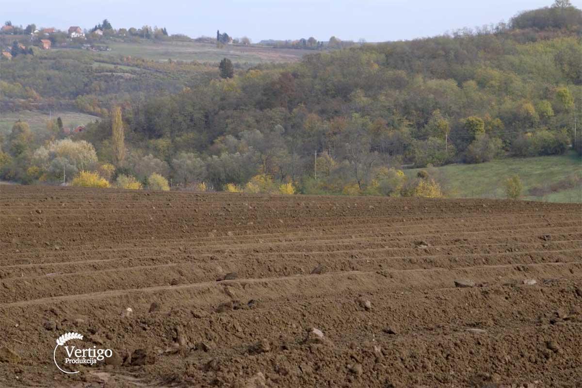 Agrosaveti---sadnja-borovnica---02