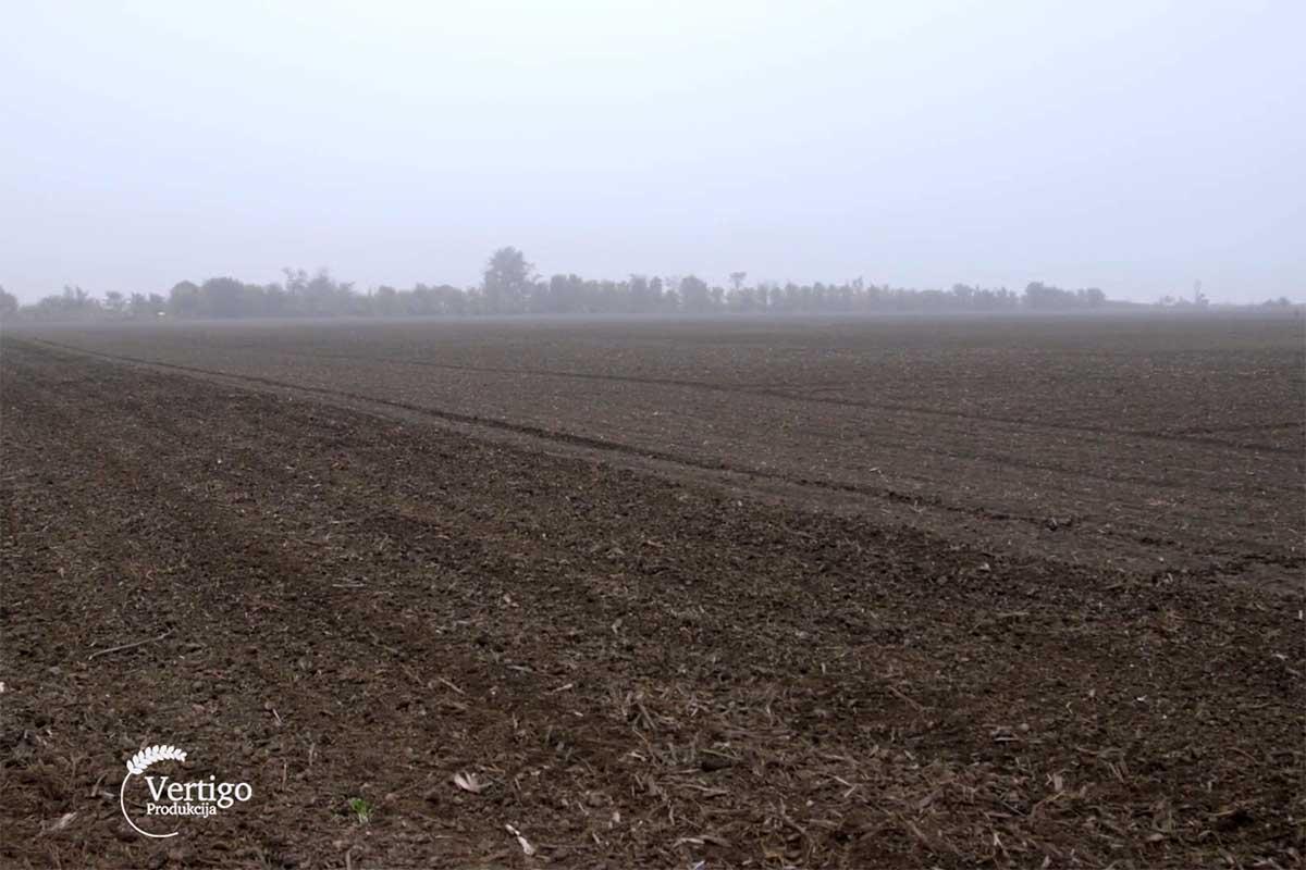 Agrosaveti---setva---psenica---Juzni-Banat---01