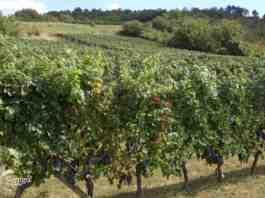 Agrosaveti---vinarije---geografsko-poreklo---Srem---02
