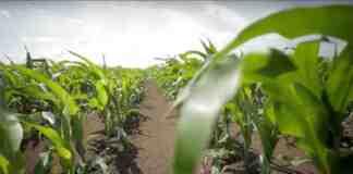 Agrosaveti---Bayer---zastita-semena---02