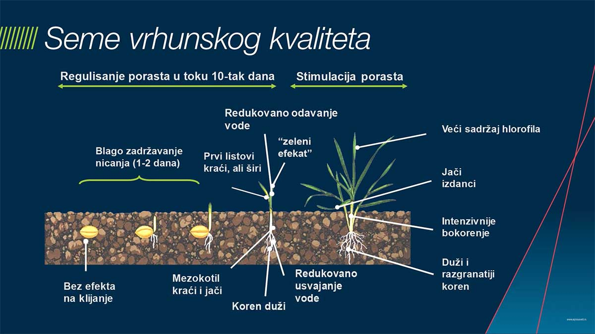 Agrosaveti---Bayer---zastita-semena---psenica-i-jecam---03