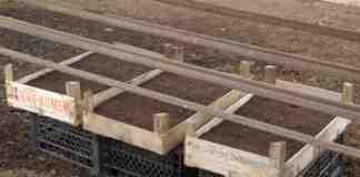 Agrosavet i proizvodnja rasada Srbobran 03