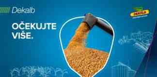 Agrosaveti Bayer Dekalb kukuruz 03