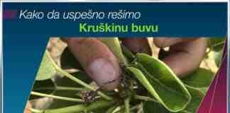 Agrosaveti Bayer Movento kruskina buva 01